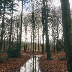 Rainy path (Jos Mecklenfeld) Tags: winter regen rain bos wald forest pad pfad path rnifilms