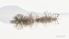 AISLADOS (THOT JF) Tags: trees arboles reflection waterreflections reflejo reflejoenelagua lago lake water clavealta highkey paisaje landscape onirico sueños dreams dreamlike