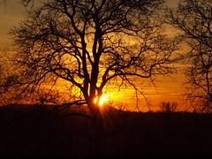 Silhouette (photohml) Tags: photograf silhouettes silhouette baum tree sonne sun backlight gegenlicht olympus olympuse620 e620 zuiko zuiko70300mm 70300mm fourthirds 2020 sunset sonnenuntergang tetz linnich rheinland düren deutschland nrw nordrheinwestfalen himmel sky colorfulsky abendstimmung abendrot abendlicht atmosphere atmospherique atmosphäre ft 43 dslr spiegelreflex oly evolt esystem nopeople outdoor outside