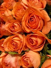 Monday wishing everyone a cheery start to the week hopes you have a lovely day. (wjaachau) Tags: autumn orange flower floral rose bouquet abstract inspiration cheerful delightful happiness sunshine garden landscape nature