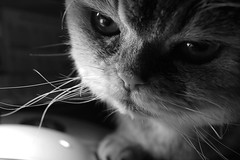 Sidelight cat and mouse HCT (7 Blue Nights) Tags: sidelight crazytuesday cat pet animal face portrait blackandwhite mono monochrome sony rx10m4 sweet cute lovely sidelit mouse zeiss carlzeiss