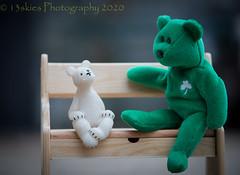 How Long Have You Been Waiting (HTBT) (13skies) Tags: waiting bears teddybear bench friendly talking questions green htbt happyteddybeartuesday teddybeartuesday