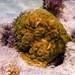 Caption This Coral at Bahia Honda State Park