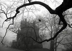 "Cincinnati - Spring Grove Cemetery & Arboretum ""Dexter Mausoleum In Foggy Morning"" (David Paul Ohmer) Tags: cincinnati ohio spring grove cemetery arboretum dexter mausoleum fog morning tree branch"