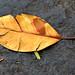 Leaf I (Coyoacán 1 Nov 2014)