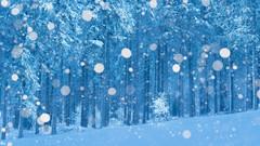 A winter mood (Pascal Riemann) Tags: landschaft schnee hochheide deutschland wald winter natur sauerland germany landscape nature outdoor snow forest