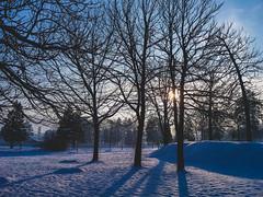 (Jelena1) Tags: snow sneg snö schnee nieve neige neve sneeuw winter zima invierno hiver vinter inverno tree trees drvo drvece arbre árbol baum träd boom albero priroda nature naturaleza natur natuur natura sky nebo ciel cielo himmel hemelgewelf serbia srbija serbie serbien servië balkans park parc parque