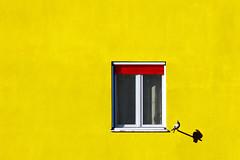 Aspettando primavera (meghimeg) Tags: 2020 genova finestra window uccello bird piccione giallo yellow rosso red