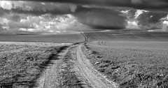 Tierra (una cierta mirada) Tags: meco landscape winter land horizon earth nature bnw blackandwhite outdoors path road clouds cloudscape cloudy agriculture