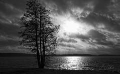 Lone tree at Kyrkviken (JHaffling) Tags: bw sweden lonely arvika svartvit kyrkviken sun lake tree sol water clouds canon landscape vatten träd landskap sjö moln ensam eosr