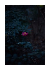 This work is 17/24 works taken on 2019/12/31 (shin ikegami) Tags: sony ilce7m2 a7ii sonycamera 50mm lomography lomoartlens newjupiter3 tokyo 単焦点 iso800 ndfilter light shadow 自然 nature naturephotography 玉ボケ bokeh depthoffield art artphotography japan earth asia portrait portraitphotography
