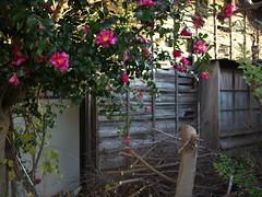 Hadano#99 (tetsuo5) Tags: 神奈川県 秦野 末広町 kanagawa hadano suehirocho dmcgx8 dgsummilux15mmf17