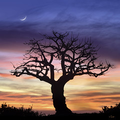 The Coral Tree (Lee Sie) Tags: tree silhouette sunset sunrise crescent moon sky clouds outdoors coral evening coastal lonetree
