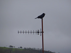 Photo of Girvan Crow by Railway Station