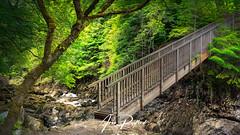 Miners Bridge (Aron Radford Photography) Tags: yellow wales snowdonia river steep bridge miners betwsycoed tree rocks waterfall water landscape nature no people