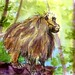 Gelada Baboon-Postcards for the Lunch Bag