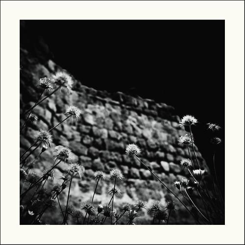 Le pouvoir des pierres / The power of stones #14