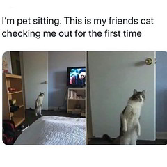 Checking me out for the first time (gagbee18) Tags: aww cats checking funny hilarious memes pets reaction