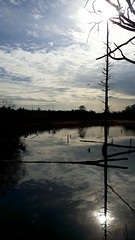 ..Nj (pclay923) Tags: uh60 nj newjersey water sun pinebarrens beauty