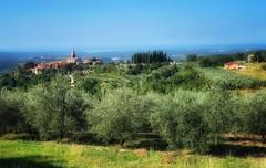 Groznjan (kate willmer) Tags: gwon olive church sun trees grass landscapee view istria croatia