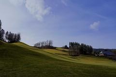 Green and Blue (**Karin**) Tags: winter hinterzarten blackforest bluesky green