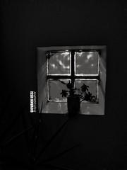Window in the dark in black and white - Photo by Giovanni Ussi @giovanniussi #window #ussi #photography #giovanniussi #blackandwhite #giovanniussiphotos #architecture #interiordesign #design #art #bnw #light #glass #flower #pot #digitalart #contemporaryar (giovanniussi) Tags: ussi contemporaryartist giovanniussiphotos digitalart arte digitalimaging futuristic blackandwhite pot neoimpressionist design contemporaryart netart architecture art glass surrealism bnw artwork modernart conceptart flower contemporary light giovanniussi interiordesign window photography contemporaryphotography