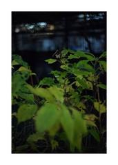 This work is 21/24 works taken on 2019/12/31 (shin ikegami) Tags: sony ilce7m2 a7ii sonycamera 50mm lomography lomoartlens newjupiter3 tokyo 単焦点 iso800 ndfilter light shadow 自然 nature naturephotography 玉ボケ bokeh depthoffield art artphotography japan earth asia portrait portraitphotography