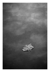 FILM - Leaf (fishyfish_arcade) Tags: blackandwhite bw 35mm blackwhite hp5 analogphotography filmphotography filmisnotdead istillshootfilm film monochrome mono ilford nikonf80 analogcamera nikkor2880f3556afd landscape rothervalley