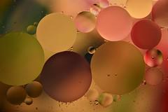 Oil & Water #3 (nagyistvan88) Tags: nagyistván túrkeve magyarország magyar hungary nagyistvan88 nagyistvan8 oilonwater olajvízben olaj oil víz water színek colors piros kék sárga zöld rózsaszín barna red blue yellow green pink brown csepp cseppek drops absztrakt abstract háttérkép background fény light special extreme különleges texture pattern alak alakzat form forma formation 2019 nikon