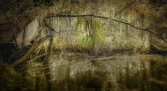 Au Fond des Bois au Lever du Soleil (JDS Fine Art Photography) Tags: woods woodland swamp marsh sunrise water lake river serenity beauty beautyofnature naturalbeauty inspirational morninglight illumination trees