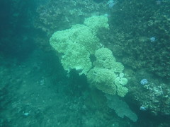 Coral Reef (Rckr88) Tags: pointeauxbiches mauritius pointe aux biches coral reef coralreef coralreefs reefs underwater snorkel snorkelling water sea ocean coast coastline nature naturalworld outdoors travel travelling