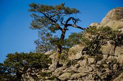 Wind force (Jose Rahona) Tags: trees arbol arboles cielo sky blue rocks landscape nature