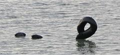 Loch Ness monster in Lelystad
