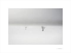 Las formas del invierno (E. Pardo) Tags: invierno winter formas formen forms nieve schnee snow árboles trees bäume niebla nebel fog steiermark austria