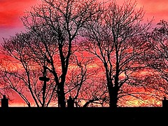 Another sunrise (TomIestyn) Tags: ireland northernireland belfast trees rooftops urbanskyline glow sunrise