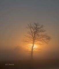 Sunrise on misty morning (katrinchen59) Tags: sunrise tree sun misty foggy morngingscenery sonnenaufgang nebel bäume sonnen morgensonne zonsopkomst boom zon mistig