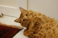 Are you watching me? (flowericious) Tags: adoptapet adoptdontshop adoptapetdontshop committolove commitmenttoloveyourpet purr