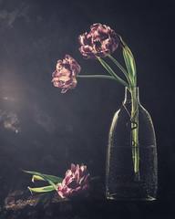 Tulips Low Key (Ro Cafe) Tags: stilllife textured flash flowers tulips lowkey darkmood black nikkor105mmf28 sonya7iii