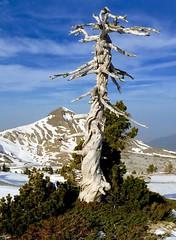 Arlas Peak (YellowSingle 单黄) Tags: arlas peak summit tree leica atlantic pierresaintmartin bearn backcountry outdoor ski mountain range pyrenees