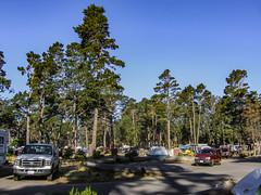 Campground 020 (davidseibold) Tags: america california morrobaystatepark sanluisobispocounty usa unitedstates camping jfflickr photosbydavid plant postedonflickr sky tree vehicle morrobay unitedstatesofamerica