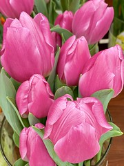 Delicate Tulips (wjaachau) Tags: flowers inspiration abstract nature floral beauty garden landscape spring tulip bouquet springtime perennialflowers homedecoration springgarden