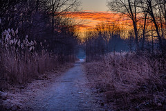 Early Morning Path (Neil Cornwall) Tags: 2020 canada february ontario windsor ojibwayprairienaturereserve winter