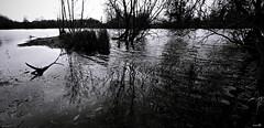 Au milieu des reflets (Un jour en France) Tags: monochrome black noiretblanc noiretblancfrance étang sombre canoneos6dmarkii canonef1635mmf28liiusm reflet arbrepaysagebrume landscape