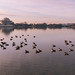 Jefferson Memorial renovation at dawn