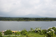 Fujikawaguchiko - Lake Shōji (CATDvd) Tags: nikond7500 日本国 日本 stateofjapan nippon niponkoku nihonkoku nihon japón japó japan estatdeljapó estadodeljapón catdvd davidcomas httpwwwdavidcomasnet httpwwwflickrcomphotoscatdvd july2019 landscape paisaje paisatge bosc bosque forest lago lake llac montaña mountain muntanya cincllacsdelfuji cincolagosdelfuji fujifivelakes fujigoko fujikawaguchiko fujikawaguchikomachi 富士河口湖町 富士五湖 prefecturadeyamanashi yamanashiprefecture yamanashiken 山梨県 llacshōji lakeshōji lagoshōji 精進湖 shōjiko fujisan montfuji montefuji mountfuji 富士山