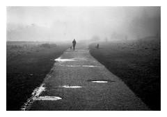 FILM - Dogwalker (fishyfish_arcade) Tags: 35mm analogphotography bw blackwhite blackandwhite filmphotography filmisnotdead hp5 istillshootfilm monochrome nikkor2880f3556afd nikonf80 analogcamera film ilford mist mono rothervalley streetphotography