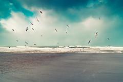 _MEE8956-Edit-Edit (John Mee) Tags: devlin mayo mayolandscapes mayolandscape mayotourism mayoseascape atlantic atlanticocean wildatlanticway ocean pornocean watchingtheocean sea seaside seaporn seascapes seagull beacch coast waw birds