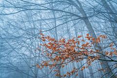 Natural harmony (Dani Valdes) Tags: fujfiilm montseny nature naturaleza landscape landscapes paisaje paisajes forest beauty beautiful love friends fog xt2 fuji fujixt2 fujifilmxt2 hojas niebla leaf trees leaves