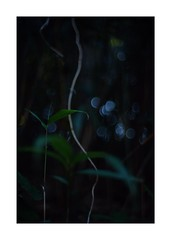 This work is 2/21 works taken on 2020/1/1 (shin ikegami) Tags: sony ilce7m2 a7ii sonycamera 50mm lomography lomoartlens newjupiter3 tokyo 単焦点 iso800 ndfilter light shadow 自然 nature naturephotography 玉ボケ bokeh depthoffield art artphotography japan earth asia portrait portraitphotography