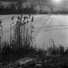 * (Bernád Rozália) Tags: film filmisnotdead analoque bw blackandwhite winter landscape yashicamat124g ilfosol3 ilford hp5 epsonv700 backlight